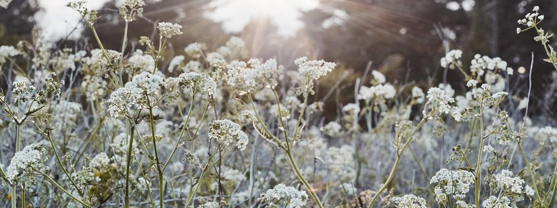 Wiese mit Frühlingsblumen