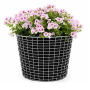 Korbo - Actieset Korbo Bin 24 + 3 Plantenzakken gratis