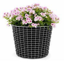 Korbo - Promo Set Bin Bucket 24 + 3 Plantingbags for free