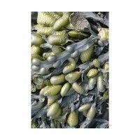 Moooi Carpets - Sea Weed Teppich 200x300cm