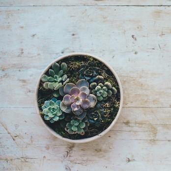 3 Kachel Kaktus