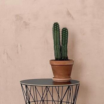 2 Kachel Kaktus