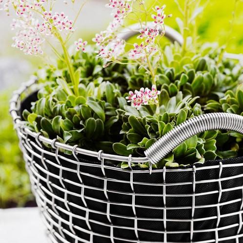 Korbo - Aktionsset Korbo Classic + Plantingbag gratis