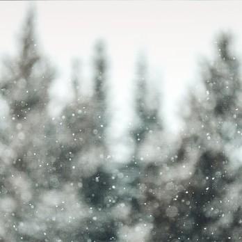 2 Kachel Winterwonderland Tiere
