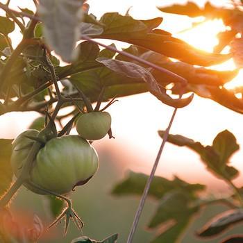 1 Mood Nutzpflanzen