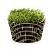 Korbo - Promo Set Korbo Classic 35+3 Plantingbags for free