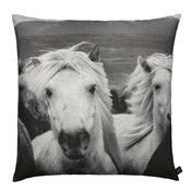 by nord: Hersteller - by nord - Icelandic Horses Kissen 60x60cm
