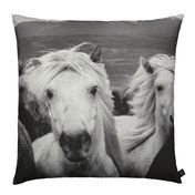 by nord - Icelandic Horses Cushion 60x60cm - black/white/washable at 30 °/incl. feather filling