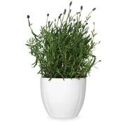 Rosendahl Design - Pot de fleurs Grand Cru Ø16cm