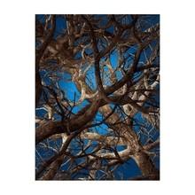 Moooi Carpets - Tapis rectangulaire Liquid Maple
