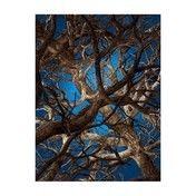 Moooi - Liquid Maple Teppich 300x400cm - blau/braun