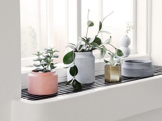 Vier Pflanztöpfe auf Fensterbank
