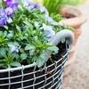 Korbo - Korbo Pflanzeinsatz