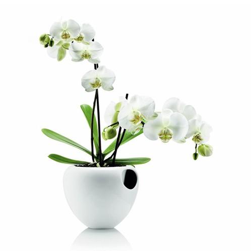 Eva Solo - Eva Solo Fayence Orchideentopf